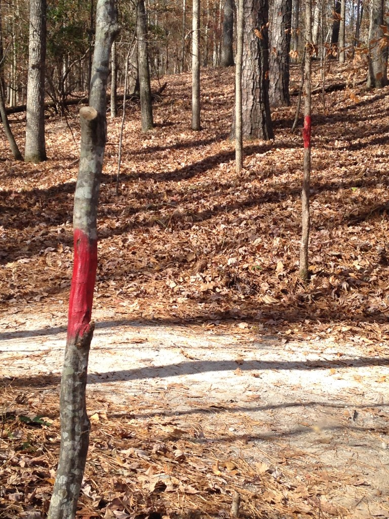The trail to the mill ruins is marked in red.